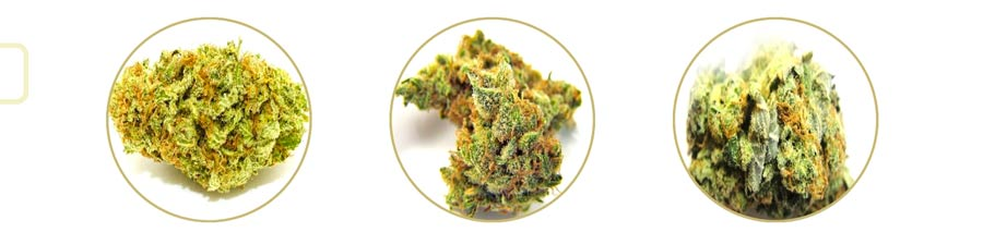 On Demand Weed will allow you to choose from hundreds of strains of marijuana!