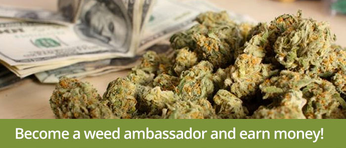 Learn how to make money selling weed by becoming a weed ambassador