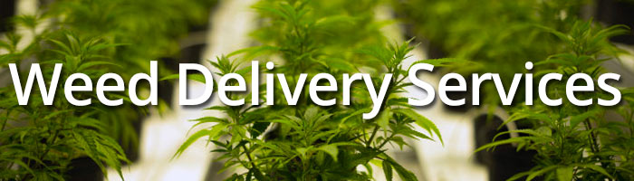 Weed Delivery Services: Learn how they save you time and money