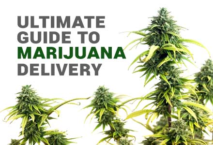 Read out Ultimate guide to Weed Delivery post to learn more!