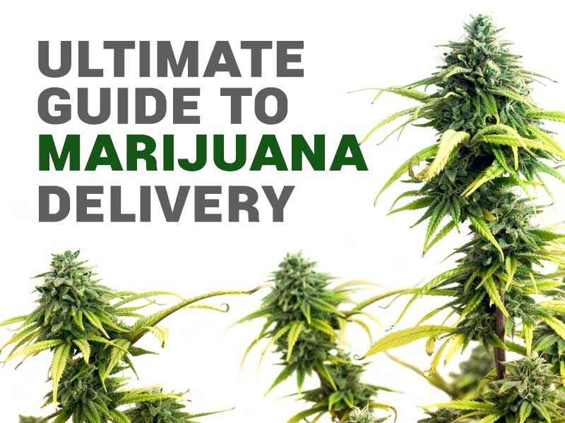 We have the ultimate guide to weed delivery!