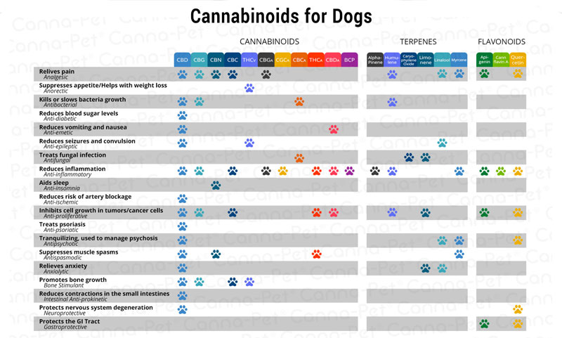All about Cannabinoids for Dogs
